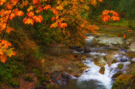 Falls colors reflecting light from light rain along the waters of the South Santiam River on the McKenzie Pass - Santiam Pass scenic byway in Oregons Cascade mountain Range. Stockfoto
