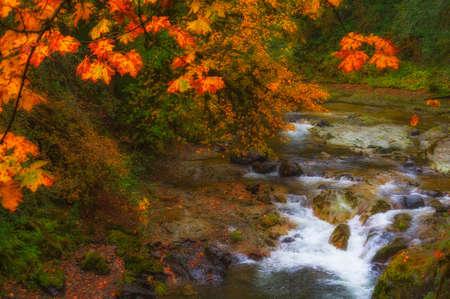Valt kleuren weerspiegelt licht van lichte regen langs de wateren van de South Santiam River op de McKenzie Pass - Santiam Pass schilderachtige byway in Cascade Mountain Range in Oregon.