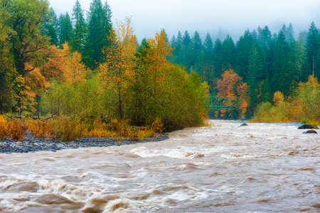Fall colors, rain and fog at the confluence of the Sandy and Bull Run rivers in Oregon.  Bull Run is the primary source of drinking water in Portland, Oregon. Its clear waters clash with the muddy waters of the Sandy River at Doge Park near Gresham, Oregon.