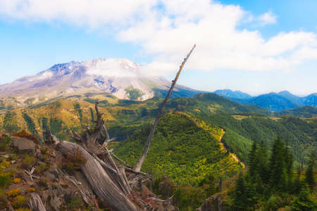 Stunning view from on top of Castle Peak of Mt. St. Helens.  A service roads cuts through the new growth forest below while remnants of the 1980's blast can still be seen. Фото со стока