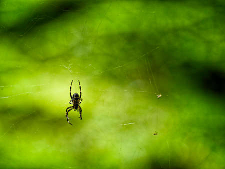 Closeup of an Orb spider on a wed in Gifford Pinchot National Forest near Mt. St. Helens Stock Photo