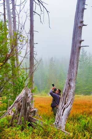 A photographers aims his camera up towards a bird in an old snag in a wetland meadow in Gifford National Forest near Mt. St. Helens. Stock Photo