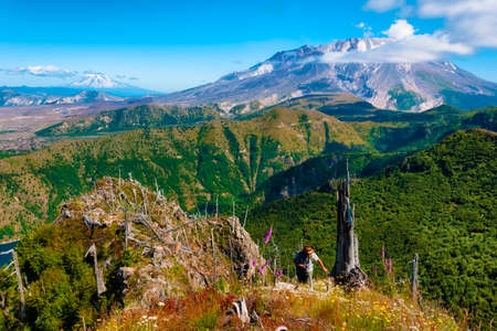 A photographer hikes up from below a hillside of wildflowers and remnants of 1980 erruptions of Mt. St. Helens.  St. Helens and Mt. Adams both volcano of the Cascade Range can be seen in the background Фото со стока