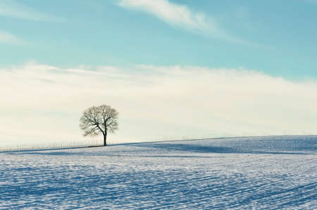A lone tree stands on a hillside field dusted with snow.  Stakes can be seen in the background where a new vineyard has been planted.