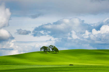 Under partially cloudy skies, four trees cast long shadows from sun rays on a green rolling hilside.