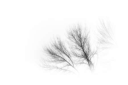 Minimalist photography of tree branches extending in from the corner toward the light.