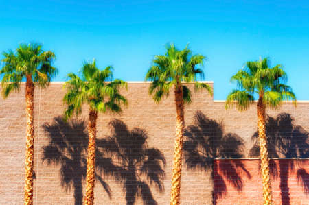 Palm trees cast shadows along a brick building under blue skies in Yuma, Arizona