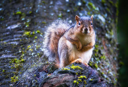 Squirrel in a tree 스톡 콘텐츠