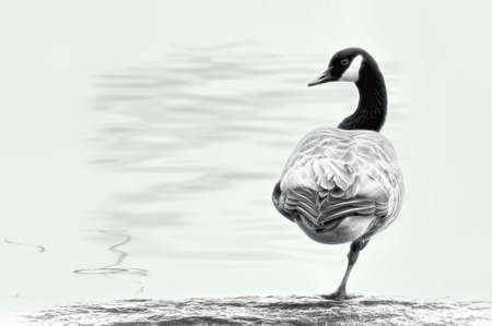 Canada Goose resting a leg while standing on a log at rivers edge.