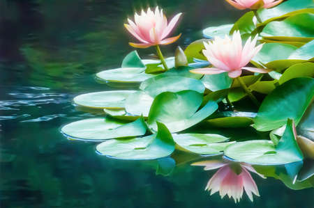 Peach colored waterlilies reflecting in a pond