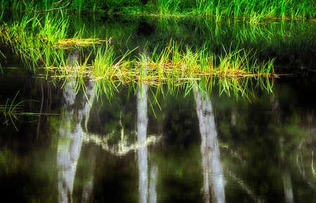 A coastal pond reflecting trees and follage. Stock Photo