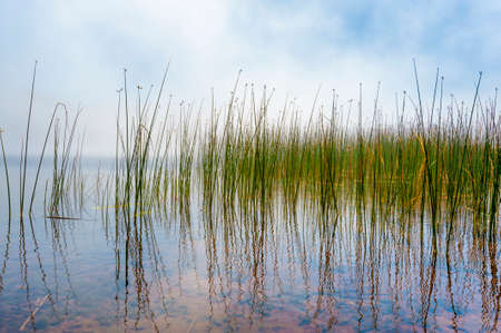 The clarity of a lakes shoreline reflect tulies and lifting fog