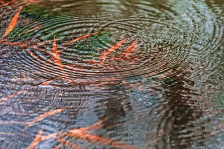 Heavy rainfall raised water levels to cover plants. Light rain drops send ripples across the water