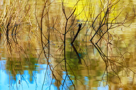 Twigs surrounded by reflecting waters from a flooding lake