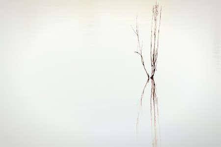 A minimalist of twigs  reflecting in a pond. Фото со стока