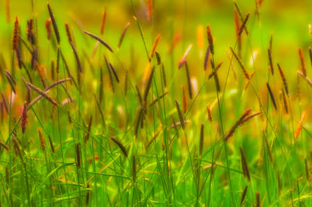 Wild grass knee high filled an open meadow on Cooper Mountian Stock Photo