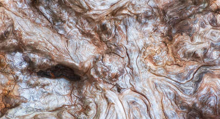 Close up of the interesting lines on a large piece of driftwood on the shores of Oregon Islands Wildlife Refuge on the Oregon Coast.