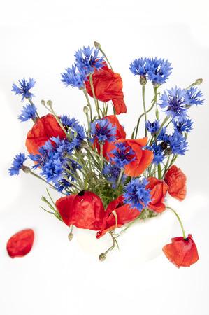 poppy: amapolas y acianos aislado en blanco Foto de archivo