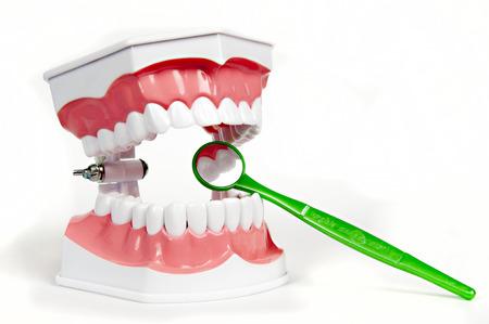 prosthetic equipment: a model of the teeth - dentures