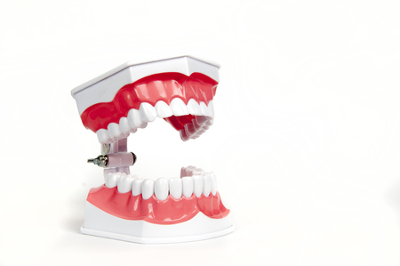 Chatter: a model of the teeth - dentures