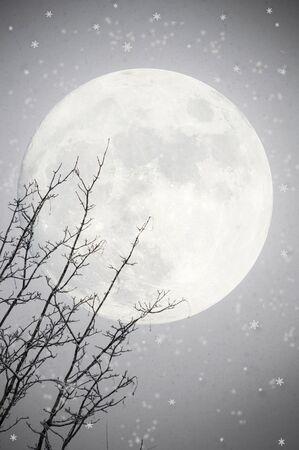 moody sky: Sfondo invernale con albero e la luna
