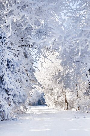 alley: winter alley