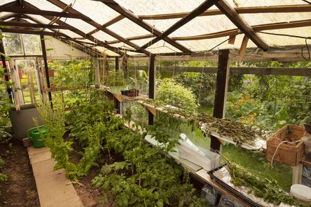 struts: greenhouse