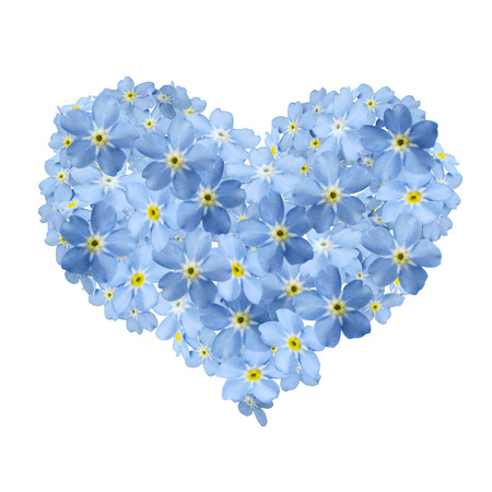forgetmenot heart and white background Stockfoto