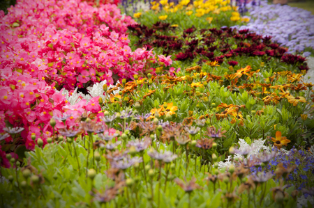 summer reminiscence - flower in the garden