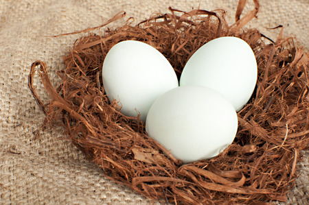 white and green eggs in the nest; green eggs contain very little cholesterol, so they are healthier Stock Photo