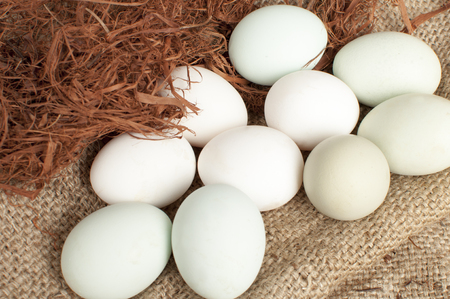 white adn green eggs; green eggs contain very little cholesterol, so they are healthier