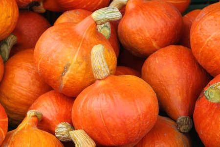 large group of hokkaido pumpkins