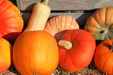 group of decorative pumpkins Stock Photo