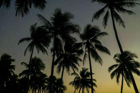 Cocoteros contra la colorida puesta de sol