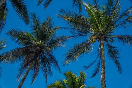 Kokospalmen kijken omhoog op zonnige dag met blauwe lucht