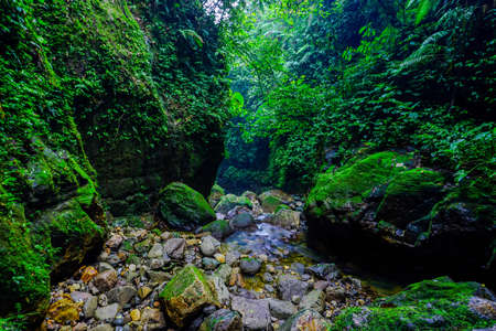 River in the middle of tropical forest