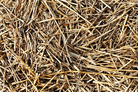Abstract background of dry golden straw photo