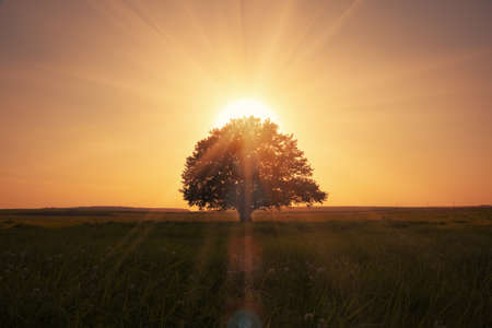 magical sunrise with tree photo