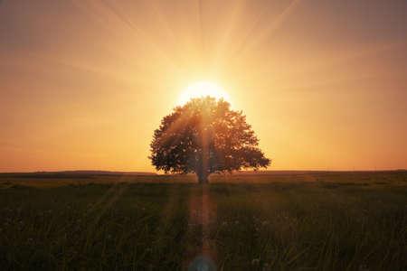 �horizon: salida del sol m�gica con el �rbol