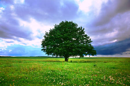 enkele boom in het veld onder magische bewolkte hemel Stockfoto