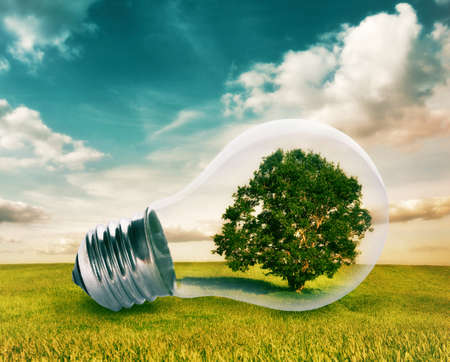 environment friendly: Light bulb with a tree growing inside in green field. Environment, eco technology and energy concept. Stock Photo