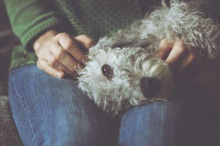 hug: cute dog in hands