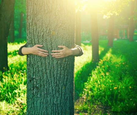 Handen knuffelen een stam van een boom in de zomer park of bos met zonlicht. Ecologie, liefdevolle aard concept