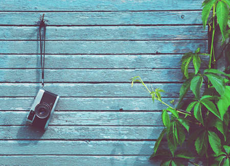 retro: Retro vintage camera hanging on wooden natural boards with green plant. Copy space Stock Photo