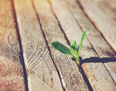 Groene spruit groeit in houten planken. Ecologie concept of nieuw leven concept