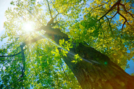 Forest or park trees in sunlight. Nature in summer sun. Reklamní fotografie - 46649737