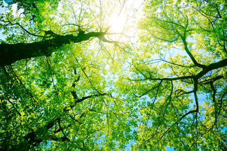nature of sunlight: Forest or park trees in sunlight. Nature in summer sun.