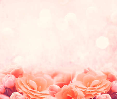 sunshine background: spring pink flower background Stock Photo