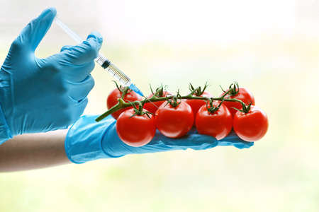 Hand with syringe injecting tomato. GMO and laboratory studies concept