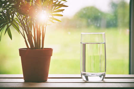 Glass of pure natural water and green flower in pot on natural morning background Stock Photo